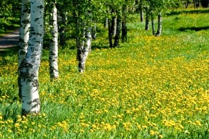 meadow-1445310-m